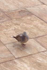 Maui bird 2013